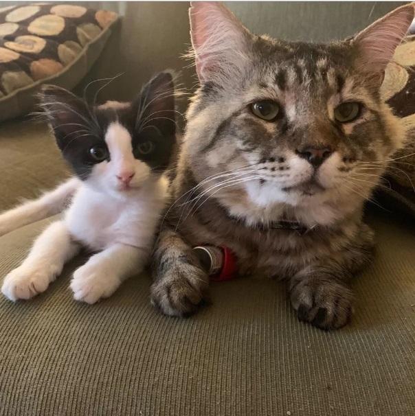 Трехногий котенок находит заботливого хозяина