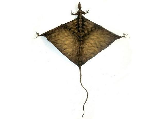Шаровиптерикс: единственное в мире существо с крыльями из попы