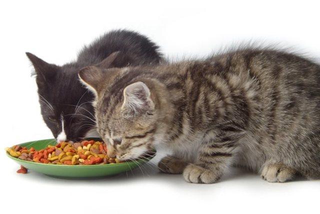 3 метода, как приучить котенка к сухому корму, советы