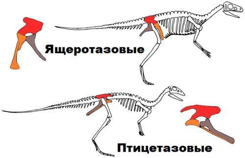Эволюция: как всё-таки из динозавров получились птицы?