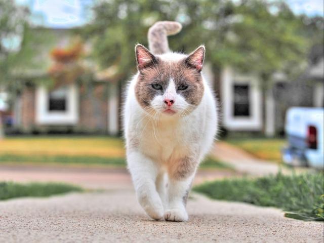 Бродячая кошка приходит в дом престарелых и получает там работу