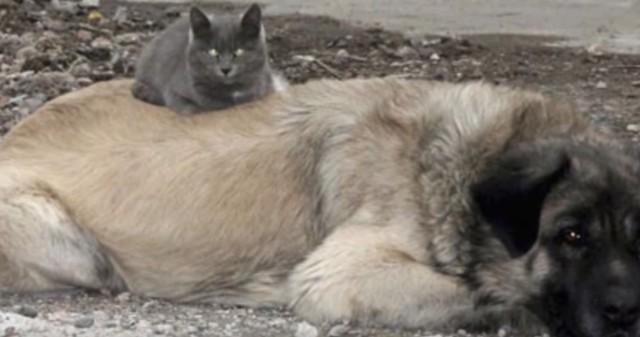 Удивительная дружба ворона и котенка