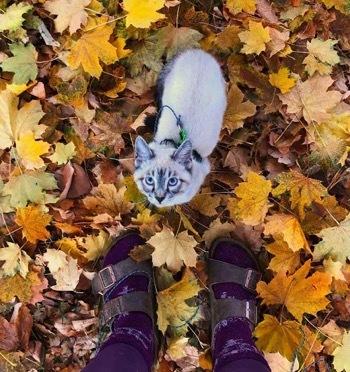Кот и пес, которые любят путешествовать вместе: реальная история