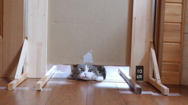 В насколько узкую щель может пролезть кот: смешное видео