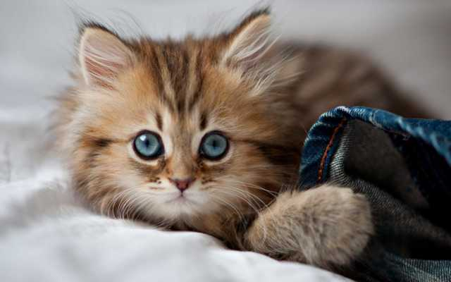 24 интересных факта о кошках, которые вы наверняка не знали