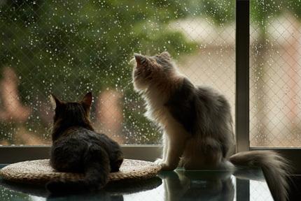 Коты-синоптики или 4 признака в их поведении, которые помогут узнать погоду