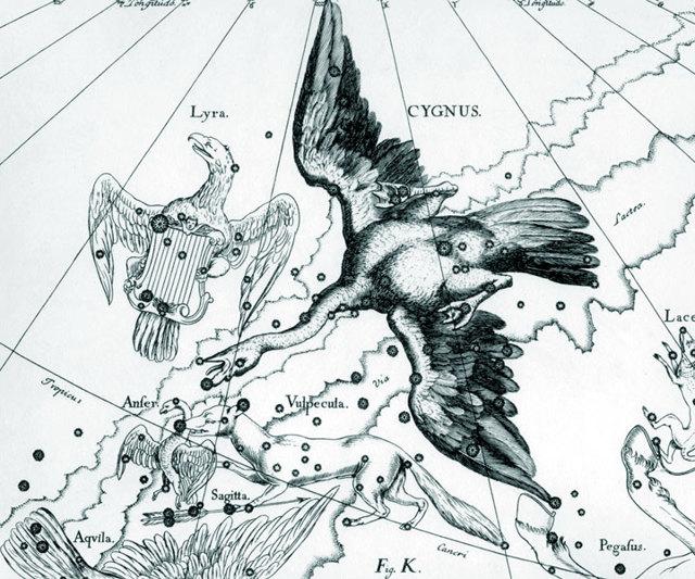 Геи, убийцы, что еще мы не знали о лебеде – символе любви и верности