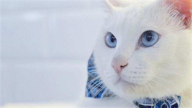 Будущий мэр Омска – кот по кличке Варламов Омск Васильевич