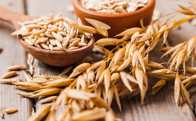 Гоацин – компостная яма во рту: переваривает пищу прямо в пасти