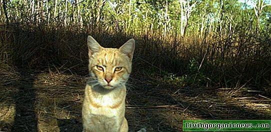 Кошки Австралии угрожают истребить 250 видов рептилий