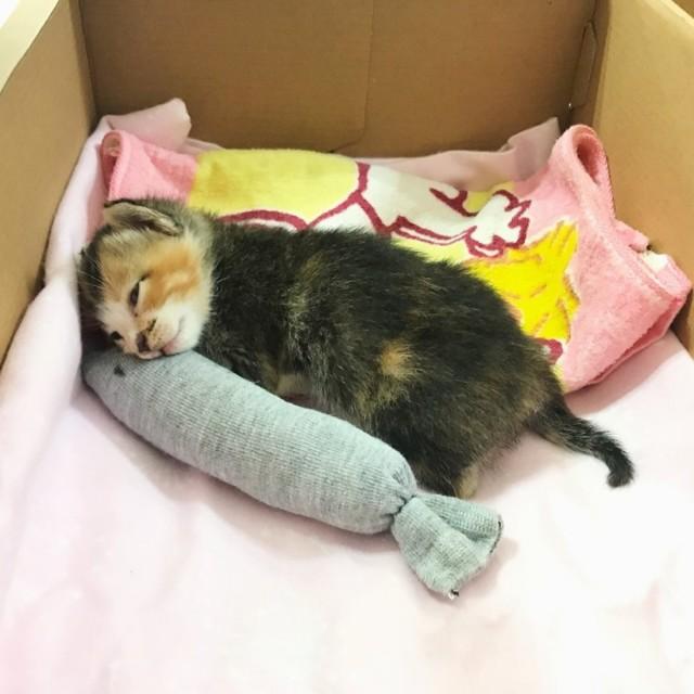 Год назад парень и девушка спасли новорожденного котенка
