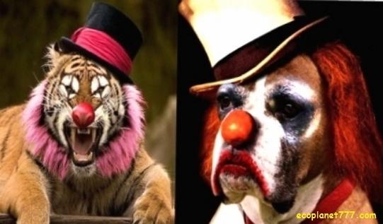 Почему развлечения с животными это не развлечение для животных