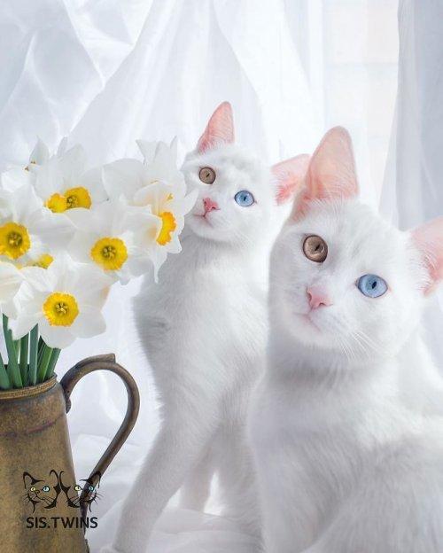 44 самых красивых кошек мира и 417 их фотографий (это не опечатка)