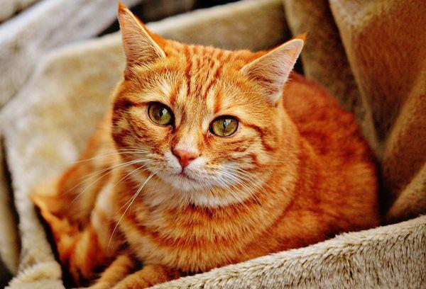 21 способ вывести и навсегда убрать запах кошачьей мочи
