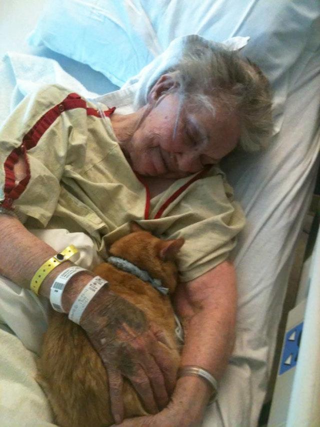 Последним желанием умирающей было проститься со своим котом