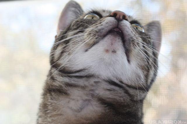 Акне у кошек на подбородке: лечение в домашних условиях