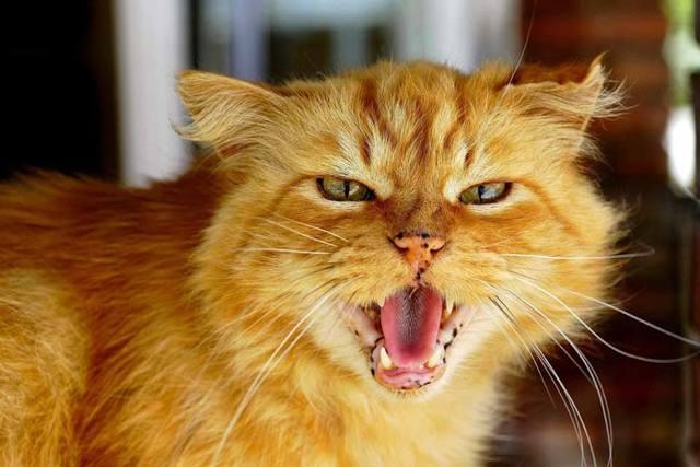 12 примет и поверий о рыжих котах: что они несут в дом и семью