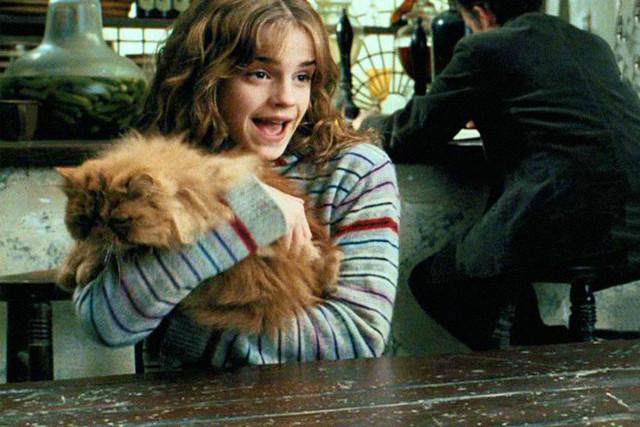 4 котика, покоривших мировой кинематограф. Часть первая.