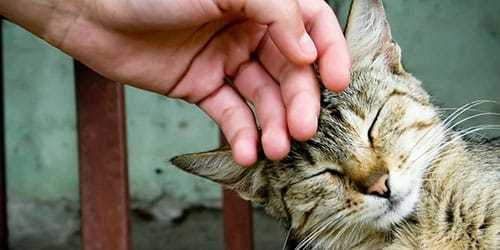 Гладить кошку во сне: толкование сонников, к чему снится, нюансы