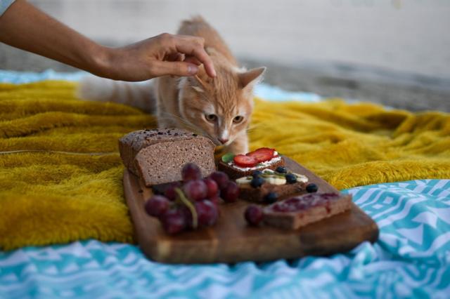 Гастрит у кошек: симптомы по видам и общие, лечение в домашних условиях