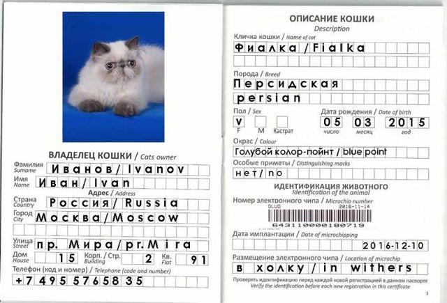 Ветеринарный паспорт для кошки: как сделать, сколько стоит