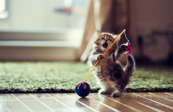 Как дрессировать кошку в домашних условиях для начинающих
