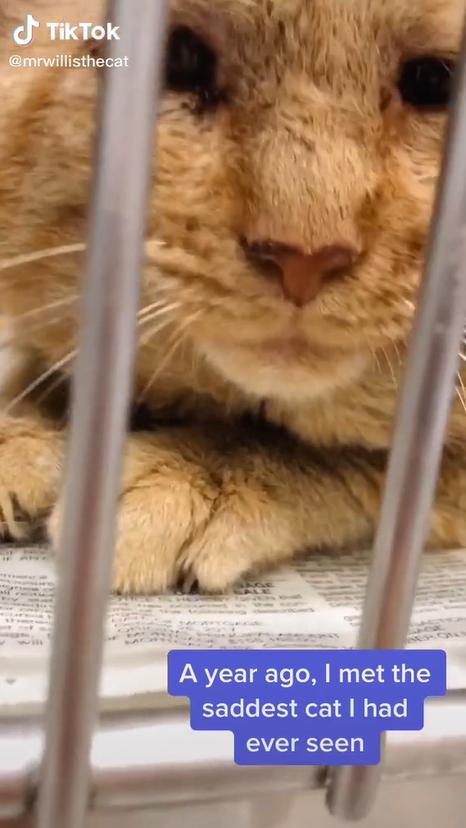 Дневник кота Шерлока. 1 апреля, старая кошачья шутка и проснувшаяся подруга