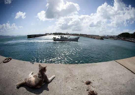 Жизнь кошек на острове Кюсю, любителей рыбки