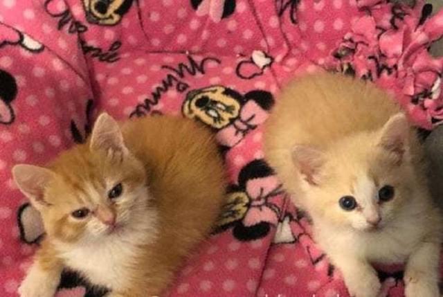Два котенка были спасены от смерти на раскаленном асфальте
