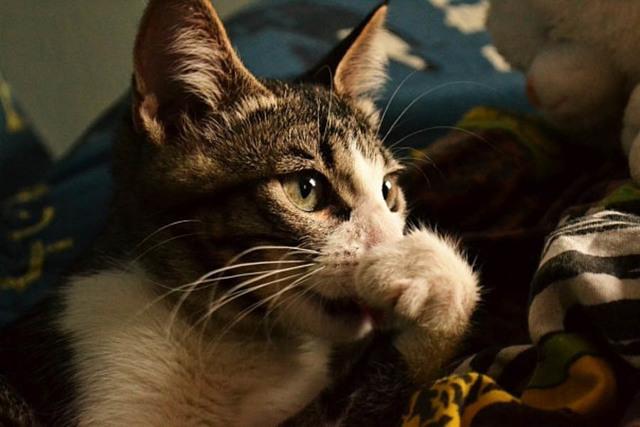 7 запахов, которые не любят кошки, что их отпугивает?