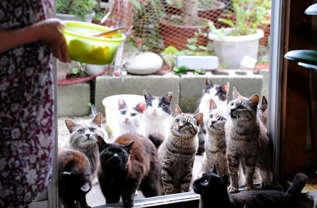 Айлурофилия или чрезмерная любовь к кошкам: болезнь ли это?