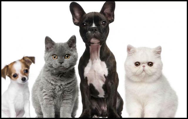 Я попробовал еще больше кормов для кошек: мои впечатления (не повторяйте!)