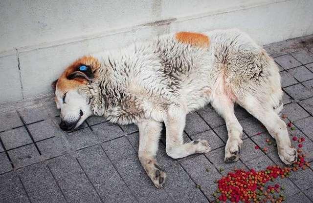Зоозащитники бьют тревогу: самоизоляция может стать причиной гибели свыше 10 тысяч животных в Москве
