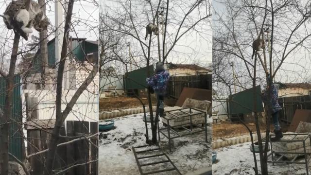 6-летняя девочка своим мяуканьем спасает котика