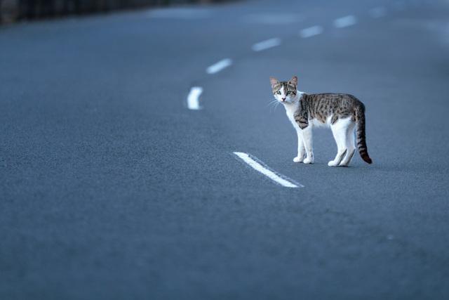 Почему кошки уходят из дома, ТОП причин, связанные приметы
