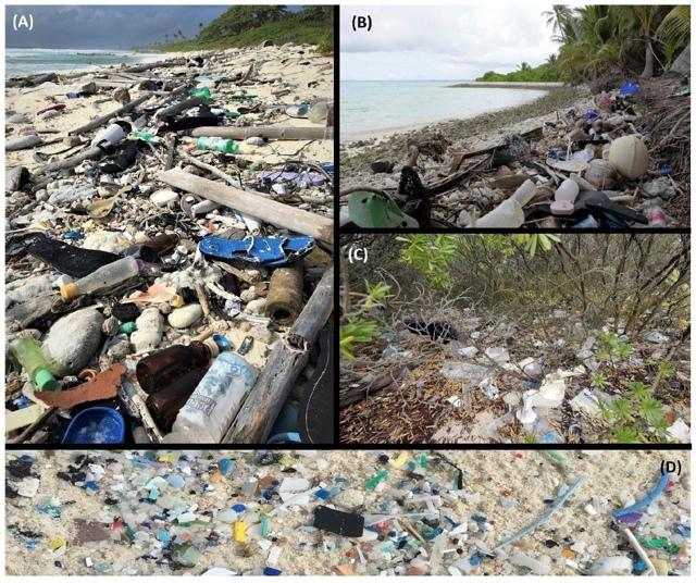 Экологическая катастрофа: как пластик губит обитателей глубин