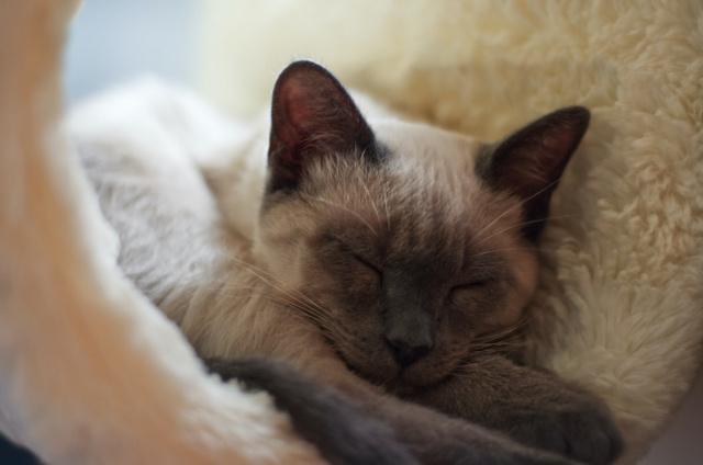Уход за котом после кастрации в первые часы и дни, что нужно делать