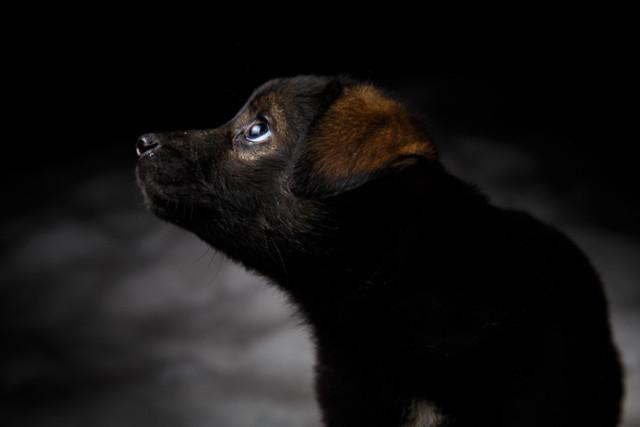 Фотограф помогает котам и собакам с черной шерсткой обрести дом