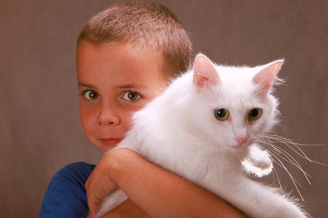Белый кот в доме, на улице, с разными глазами: приметы, суеверия