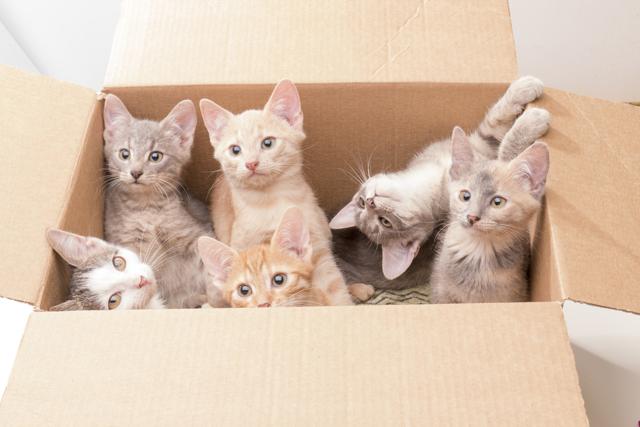 7 вариантов, куда пристроить котят: что сделать и как помочь им