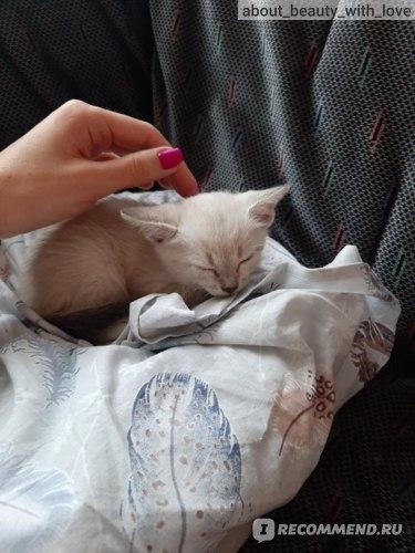 О спасении красавицы-кошки Джанго