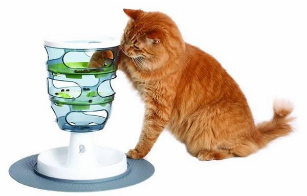 Автокормушка для кошек своими руками: 6 вариантов, виды и цены