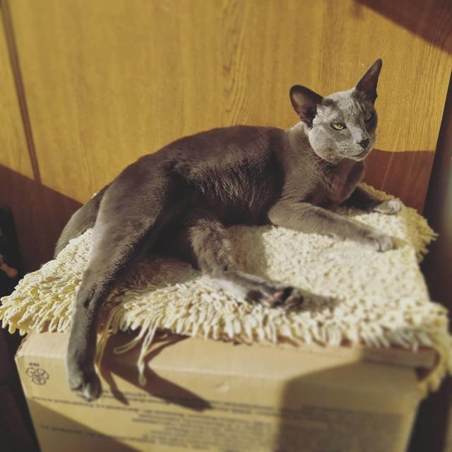 Советы от котиков в это непростое время самоизоляции