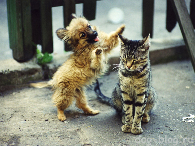 Щенок нашел крошечного котенка и не хочет с ним расставаться