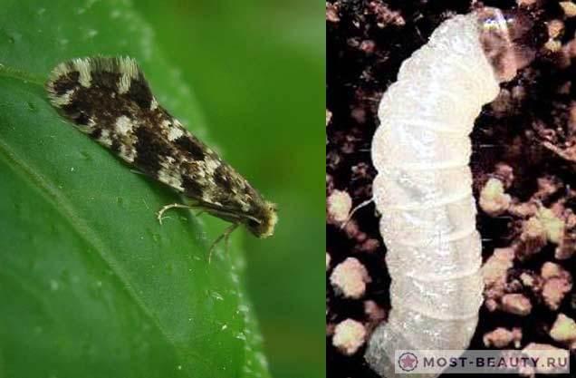 Факты о насекомых, которые не рассказывают в школе