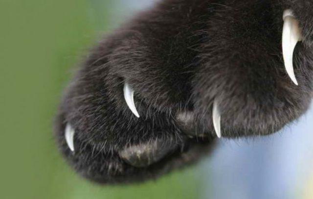 Антицарапки для кошек: как снять, наклеить, советы по выбору