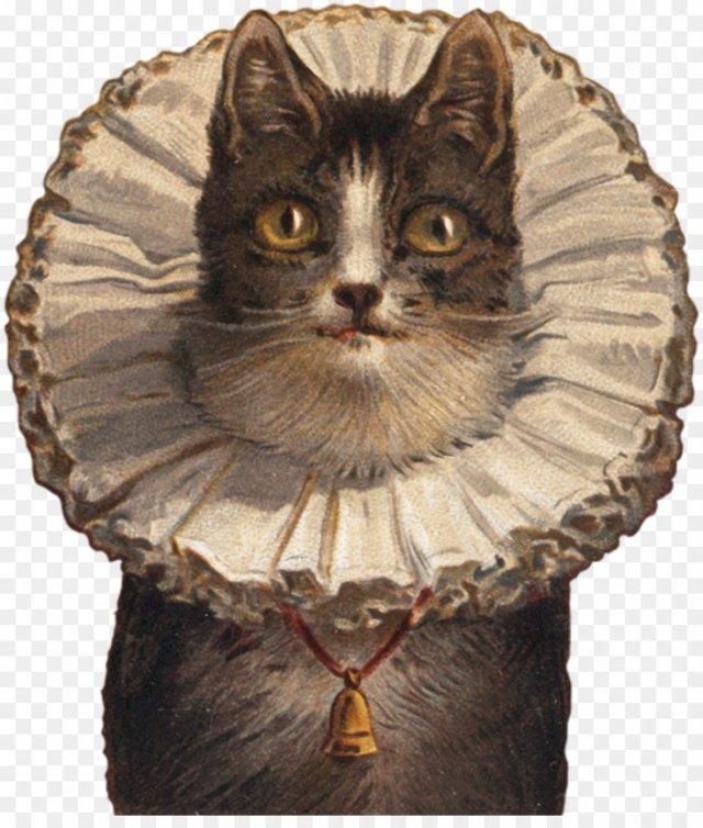 Воротник для кошки (защитный): зачем нужен, как сделать (идеи)