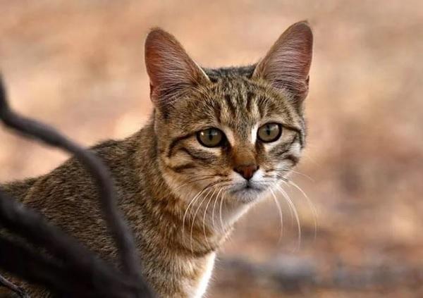 Почему кошки закапывают еду, миску с водой и как отучить от этого