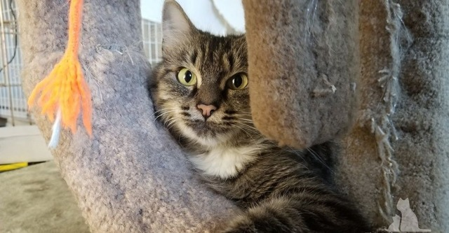 Эта кошка потеряла своих котят, но не оставила сироту