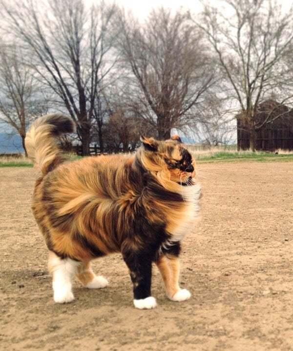История о хитром котике Оскаре, симулянт пушистый)))